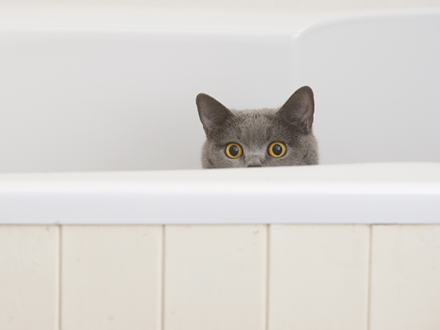 고양이가 쓰레기통을 사용하지 않으면 어떻게해야합니까?