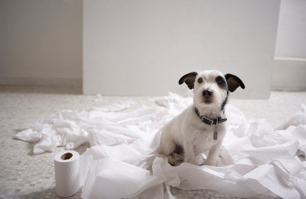 Puppy Potty Training - Four Steps to Successfully Potty Train Your Dog