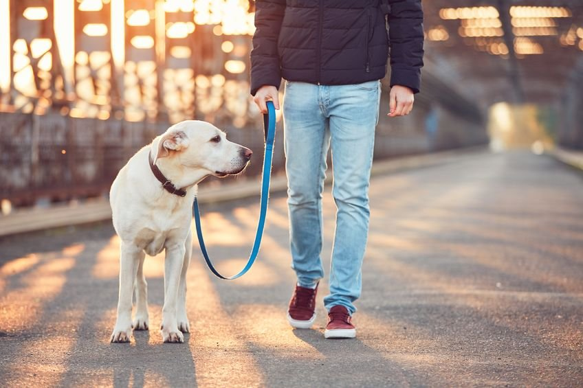 Five tips for walking a fearful or anxious dog