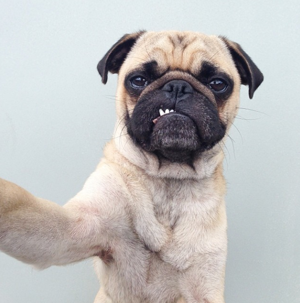 15 Types of Selfies Dogs Are Taking These Days