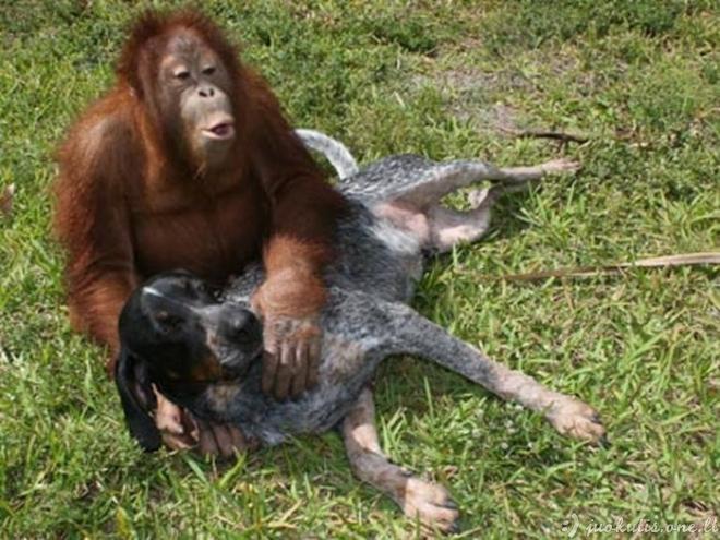 동물 이상한 커플
