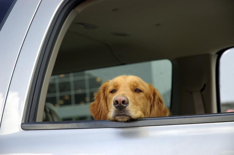 Dogs With Travel Sickness