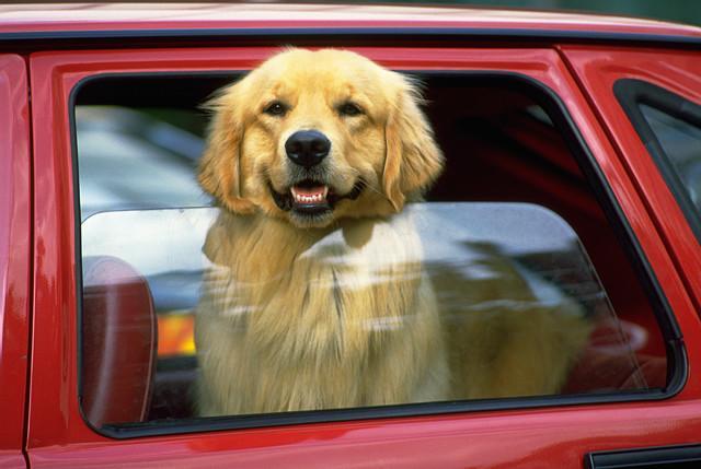 Barreira do cão do carro