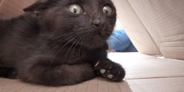 Scaredy Cat: Como lidar com um felino assustado