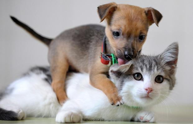Getting a New Dog? How to Acclimate the Family Cat