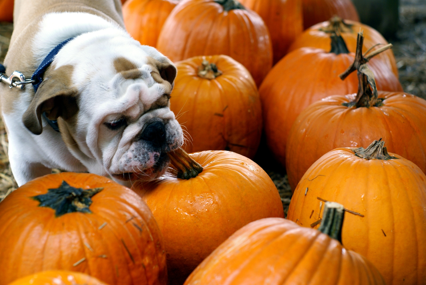 5 Fall Foods To Share With Your Dog