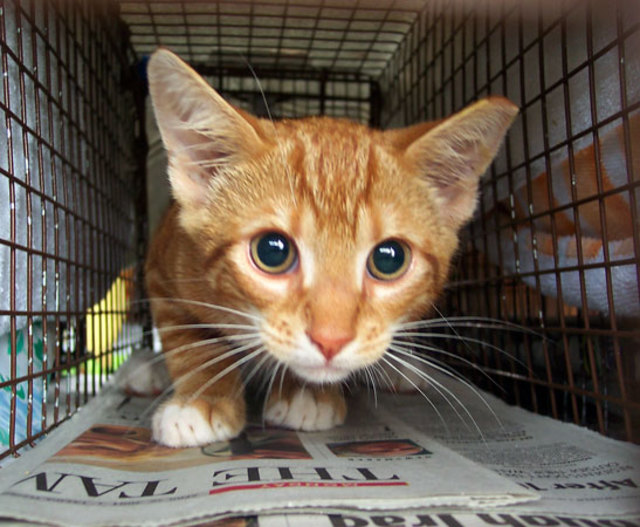 O Feral Cat Conundrum Parte 2