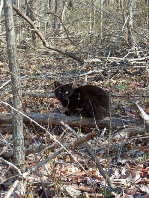 O enigma do gato feroz: perguntas e soluções Parte 1.