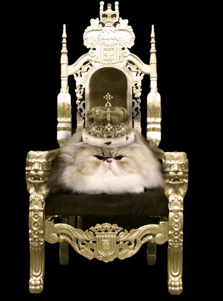 11 Problemas do Primeiro Mundo para Gatos
