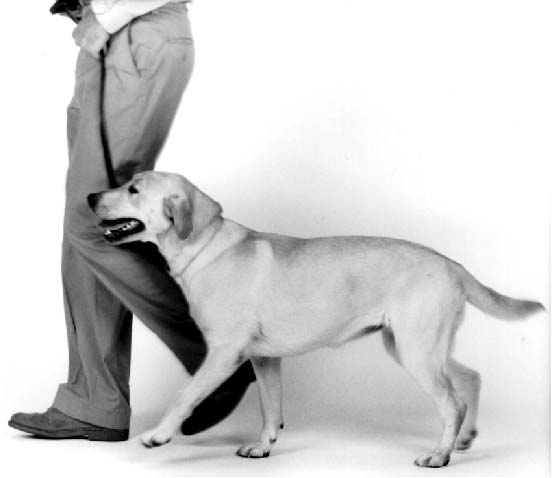 Teach Your Dog Some Contextual Heeling