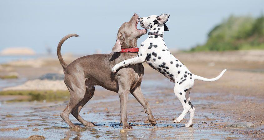 A maneira segura de quebrar uma luta de cão