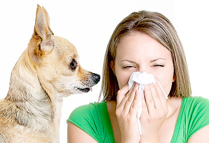 11 Best Dog Breeds For Allergy Sufferers