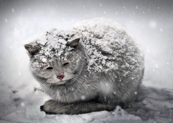 Não deixe o seu gato congelar alimentos durante o tempo frio