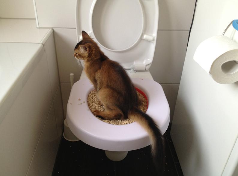 고양이에게 화장실 사용을 가르치십시오.