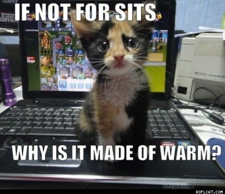 16 Winter Warming Ways - A Cat's Guide to Surviving the Chill