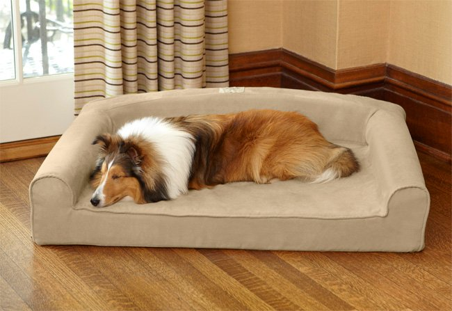 Could Your Dog Benefit From A Bolster Bed?