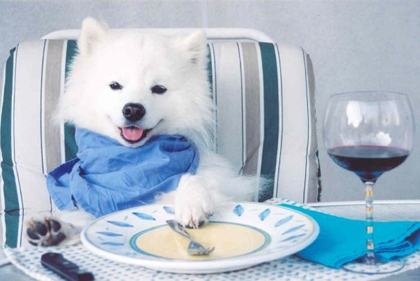 Leitura de seu cão Etiqueta de Ingrediente de Alimentos: O que você deve procurar e que você deve evitar