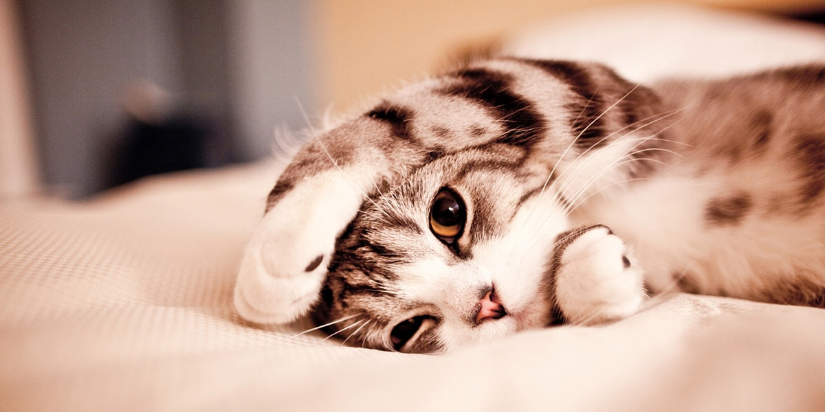 Is Your Cat Actually Lethargic?