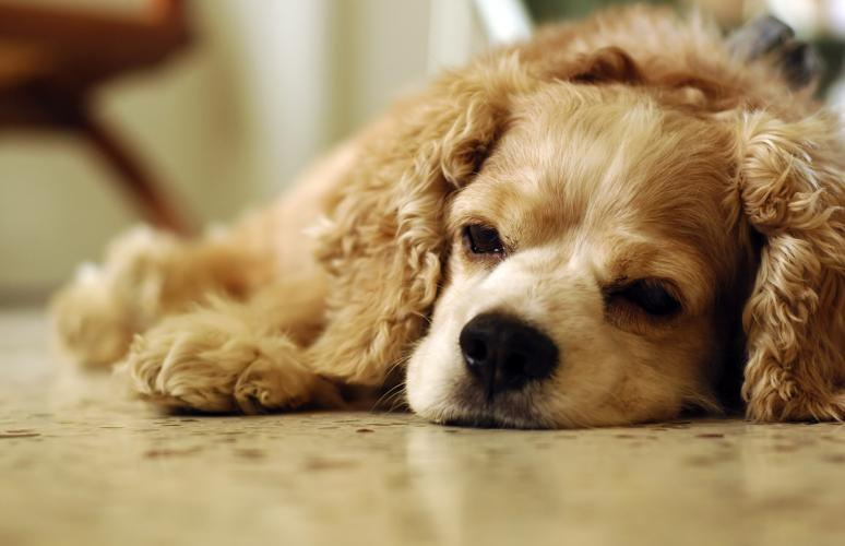 Heartworm Disease in Dogs