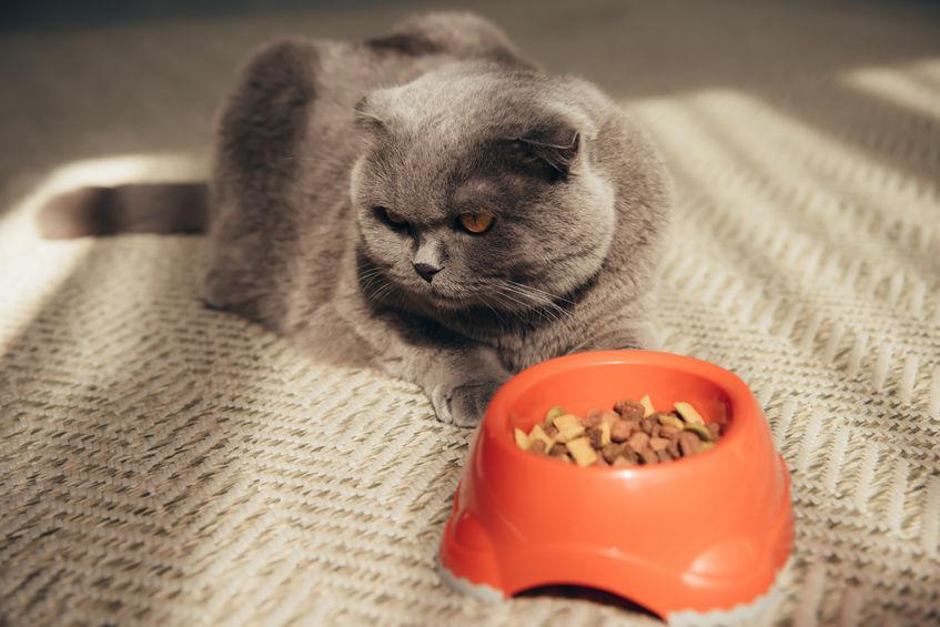 도와주세요! 고양이가 먹지를 않아요