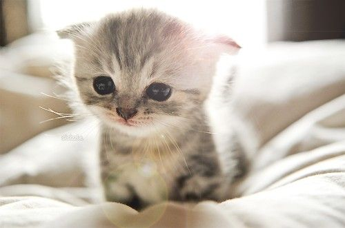 5 Reasons Why Your Kitten is Crying at Night