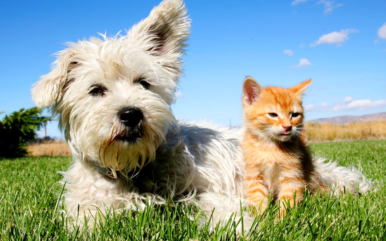 Pet Insurance: Is it the Right Choice for you?