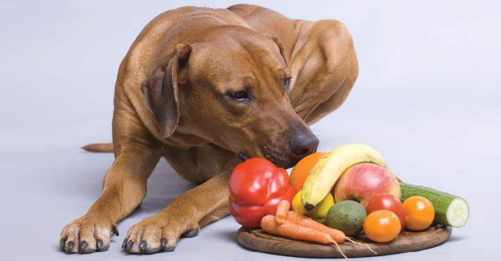 Três artigos comuns da despensa podem melhorar a saúde do seu cão