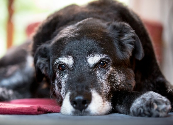 Easing Separation Anxiety in Dogs