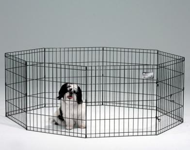 5 Coisas Para Saber Sobre Exercício Canetas Para Cães