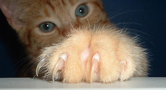 7 Facts About Declawing Your Cat