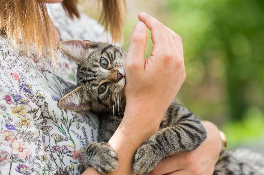 Dicas para impedir que seu gato morda