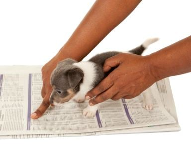 Como treinar seu cão: Pontas brincalhão do treinamento do Potty do filhote de cachorro