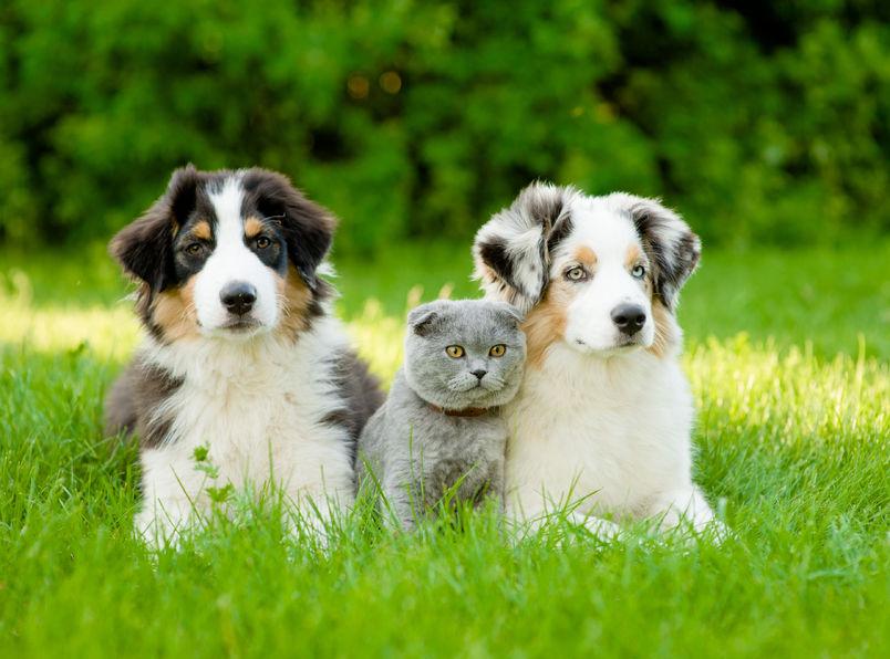 Como viver com alergias para animais de estimação sem se livrar de seu animal de estimação?
