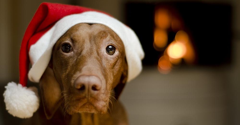 10 riscos de férias de inverno para cães