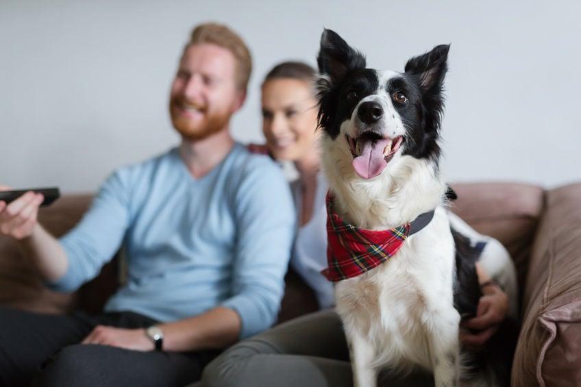 Quatro razões pelas quais seu cão se apoia nas pernas