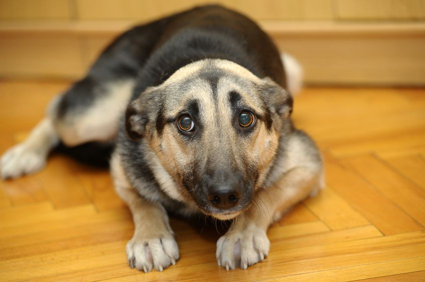 Six Ways to Calm an Anxious Dog