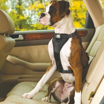 Cintos de segurança para cães