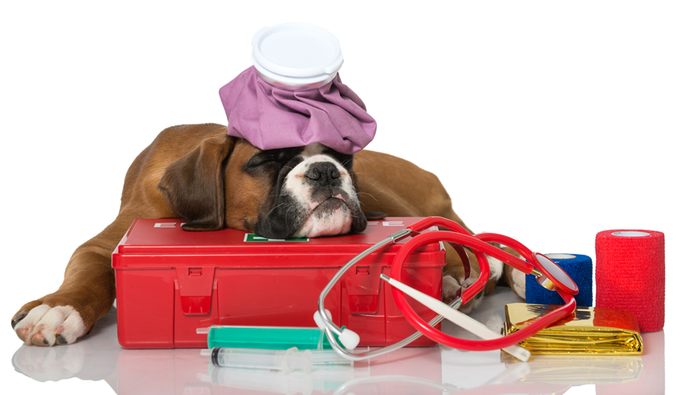 Make a First Aid Kit for Your Pooch with These 10 Great Items