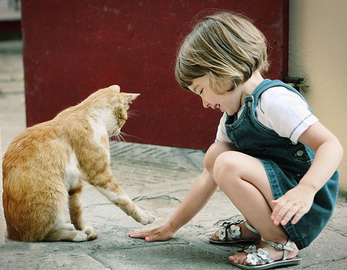 Which Cats Cope Best Living With Other Cats, Dogs or Children?