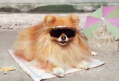 Cães da praia: Bumming ele com seu arco Wow.