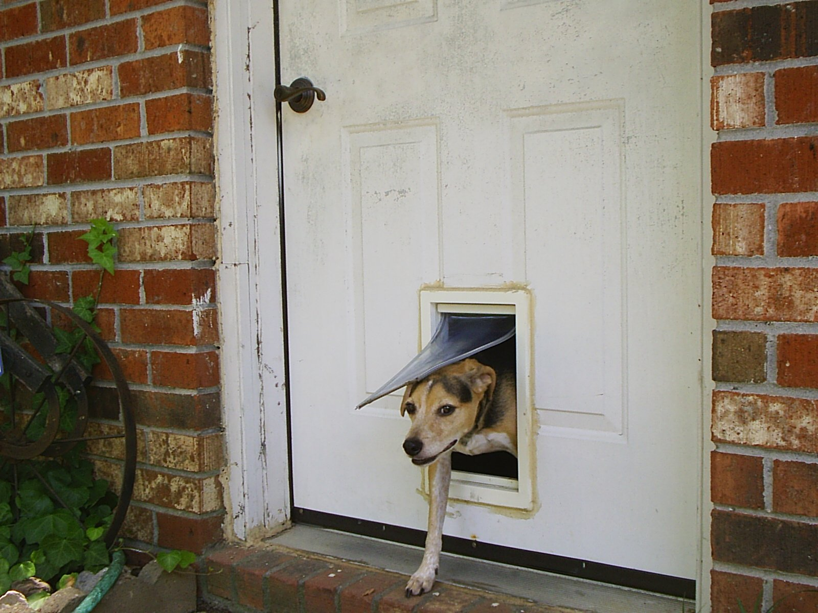 Pet Bucket Blog & 5 Things To Consider Before You Buy A Dog Door