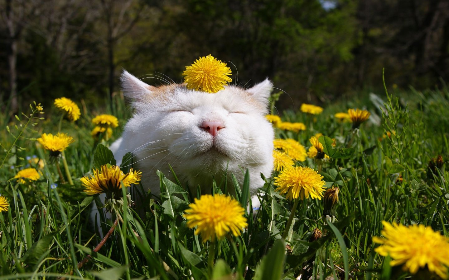 Create a Garden Your Cat will Purr About
