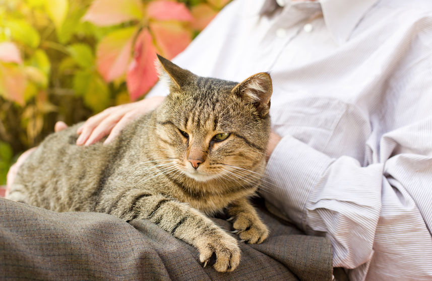 What you need to know about feline senile dementia