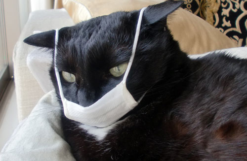 Can Cats Catch the Flu From Us?