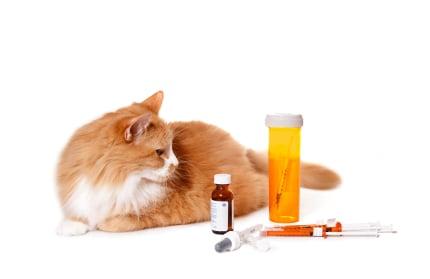 고양이에게 약을주는 4 가지 방법
