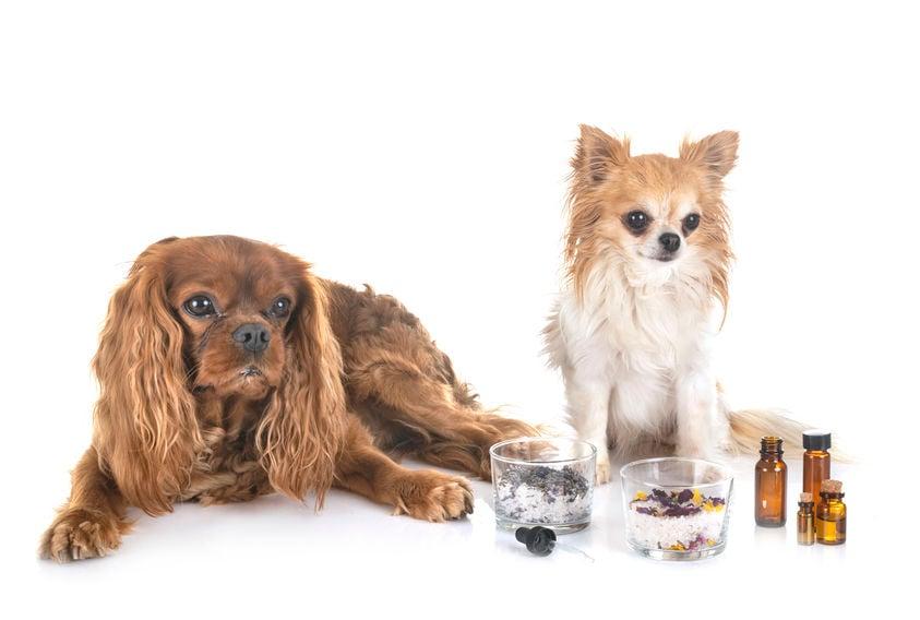 狗用CBD油:您需要知道的