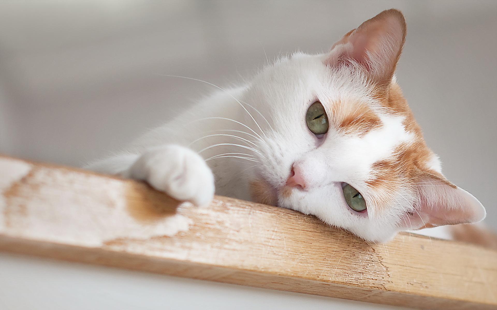 Kedilerin dışkılarındaki kan nedir