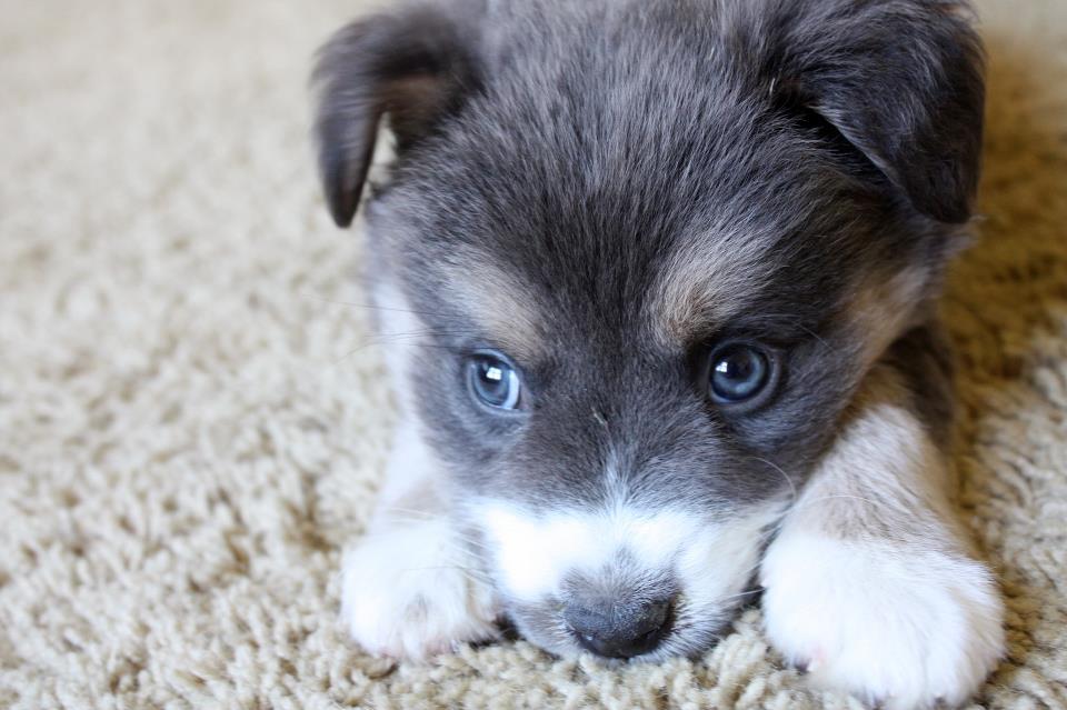 Teste de DNA para Cães: Descobrindo Ancestralidade de Raça Mista