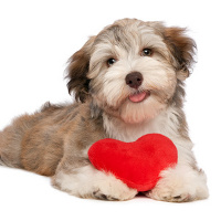 Recognizing Symptoms of Heartworms: Prevention, Diagnosis, and Treatment