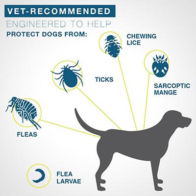 8 month protection seresto flea collars